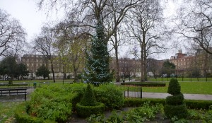 Christmas tree in Russell Square