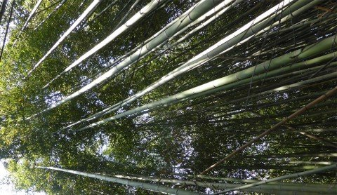 Bamboo – more exciting than watching the grass grow