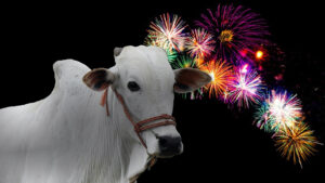 Lunar New Year oxen and fireworks