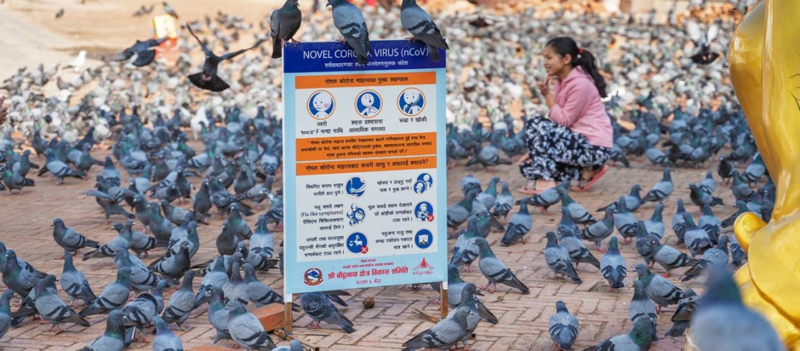 Pigeons sit on a warning sign telling in Nepal about the symptoms of coronavirus.
